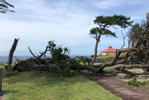倒木の被害も多くあった